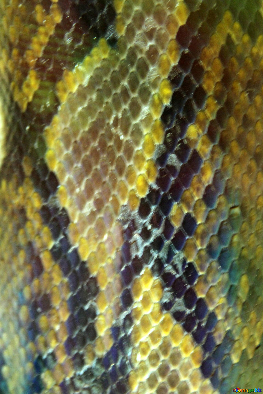 Textura de piel de serpiente textura pieles. serpiente. pitón reptil ...