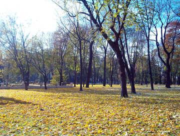 Autumn Park  №10899