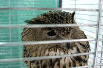 Owl  in cage №10814