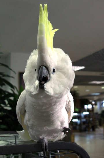 Evil  Parrot №10776