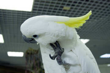 Funny  Parrot №10783