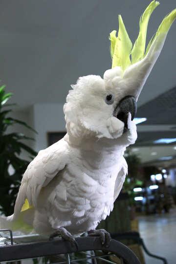 Parrot  shouts  №10780