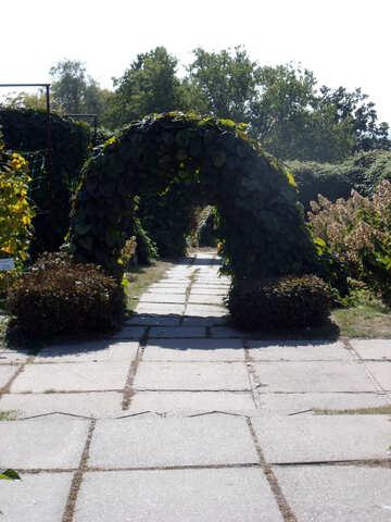 Bogen Eingang    Garten №10002