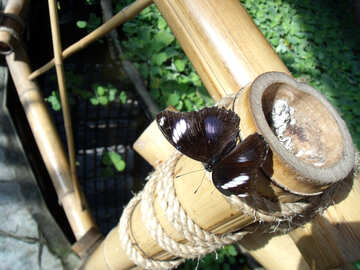 Butterfly on the bamboo №10669