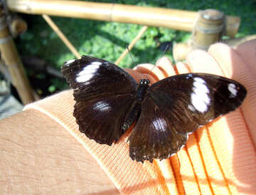 Butterfly sit on the clothes №10661
