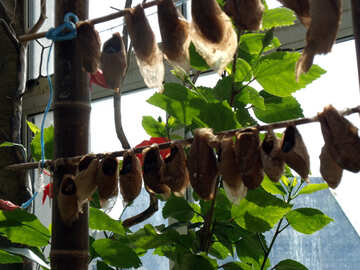 Cultivation exotic butterflies  №10671
