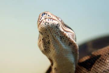 Head  snakes №10148