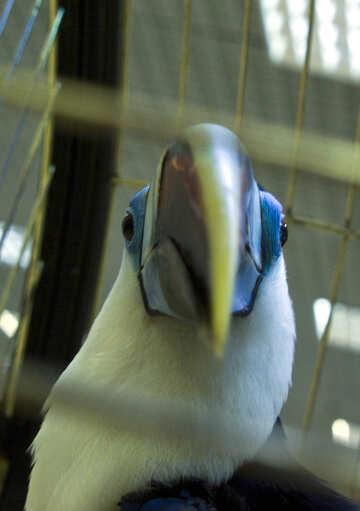 Bird large beak №10771