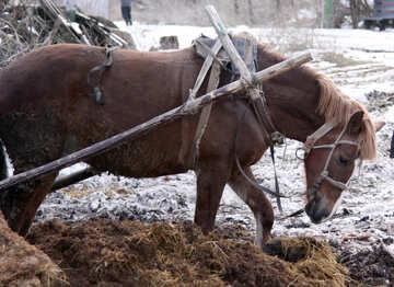 Horse   №10464