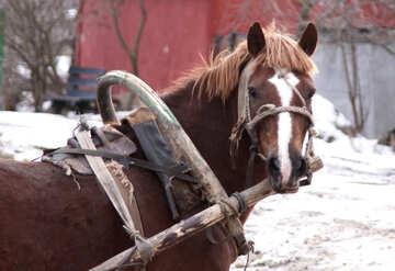 Rural  horse №10476