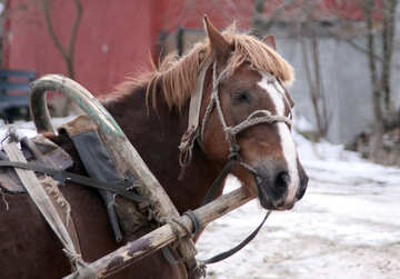 Small  horse №10455
