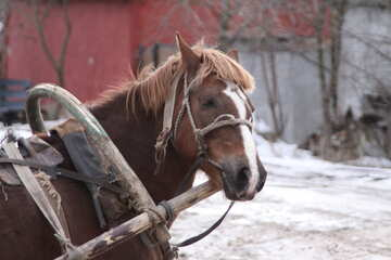 Tired  horse №10451