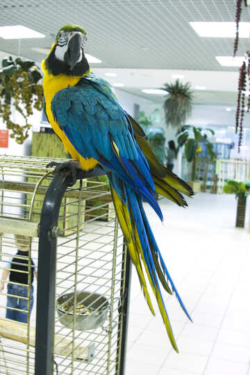 Parrot  Macaw №10763
