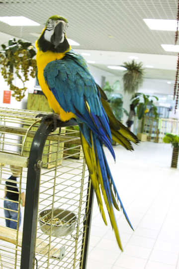 Parrot  Macaw  in  shop №10754
