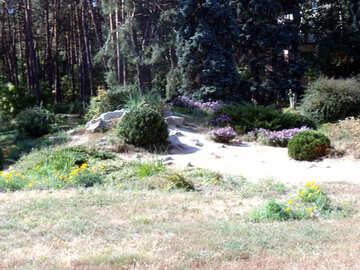 Forest  slope №10054