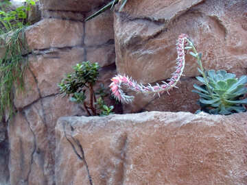Flower Cactus  №10623