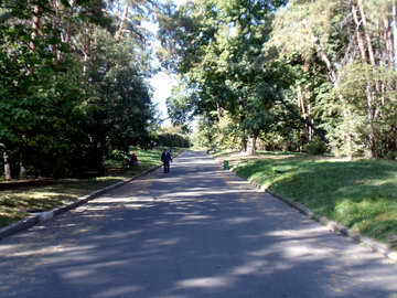 Male  walks    Park №10005