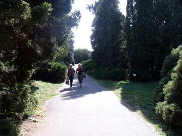 Zwei  Frauen  Park №10007