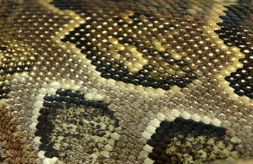 The texture. Pattern  skins  snakes. №10391