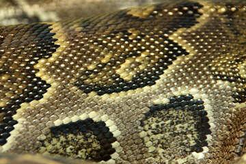 struttura.  Modello  serpente  pelli.   №10222