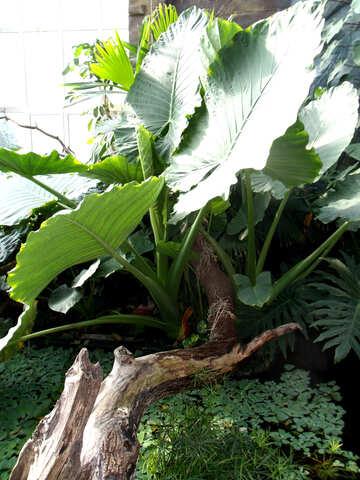 Plants Tropics  №10641