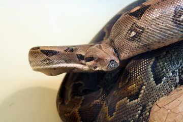 Snake.  Wallpapers  for desktop  Screen №10207
