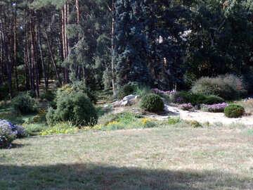 Wald  Entwurf №10047
