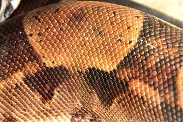 Skin  snakes. №10300