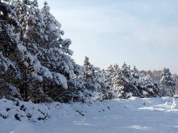 Snow  landscape  №10503