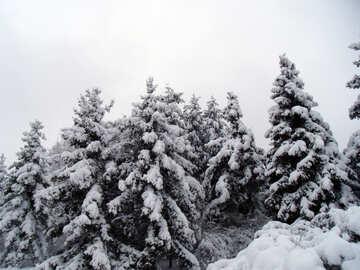 Snow   №10524