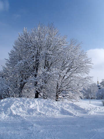 Snow  snow №10548
