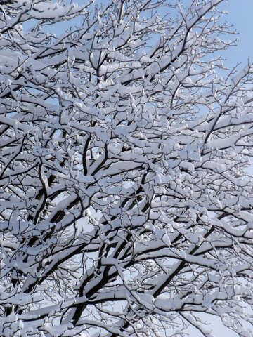 Niederlassungen  Kastanie  und    Schnee №10518
