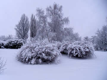 Snow  bushes  №10521