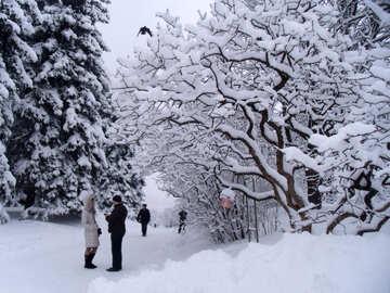 Lillà  e    neve  №10502