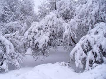 Many  snow №10522