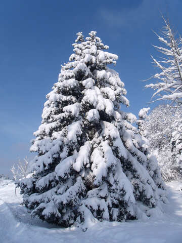 Snow  tree №10551