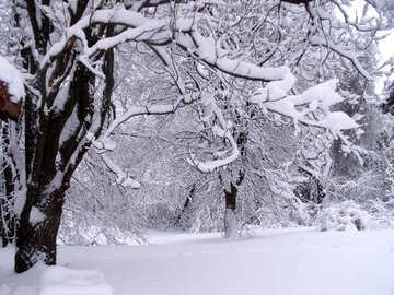Trees   snow №10561