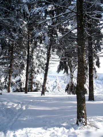 Trees   snow №10571
