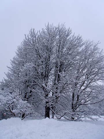 Snowy  Gardens №10554