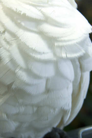 Texture  feathers  White №10833