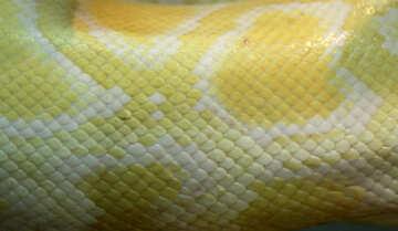 The texture. Light  python. №10318