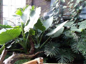 Tropical plants  №10677