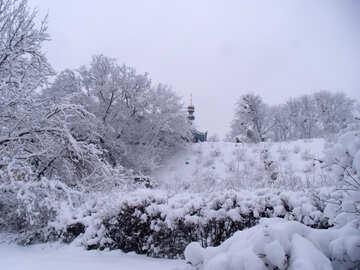 Winter  №10581