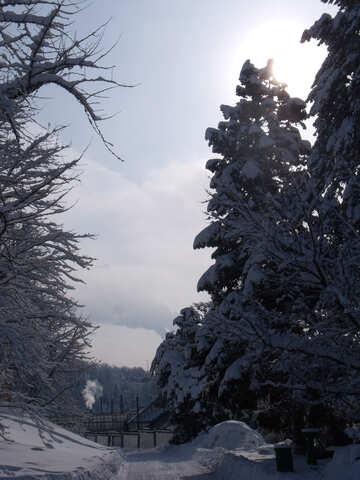 Winter  Park №10575