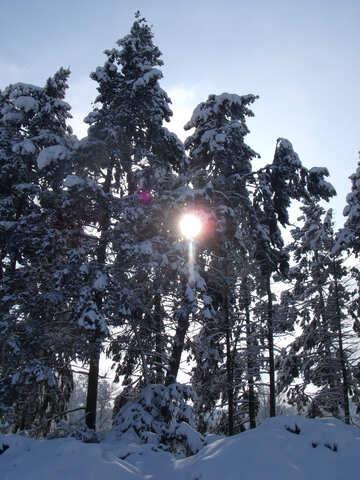 Winter  sun №10538