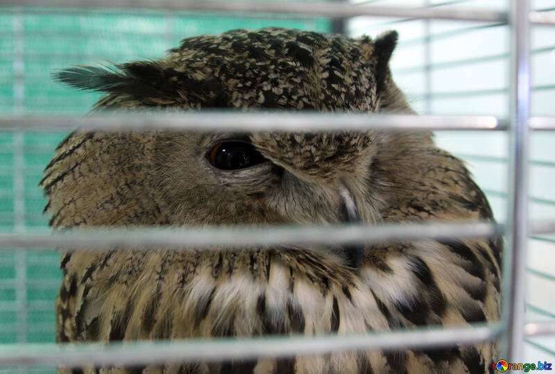 Owl №10809