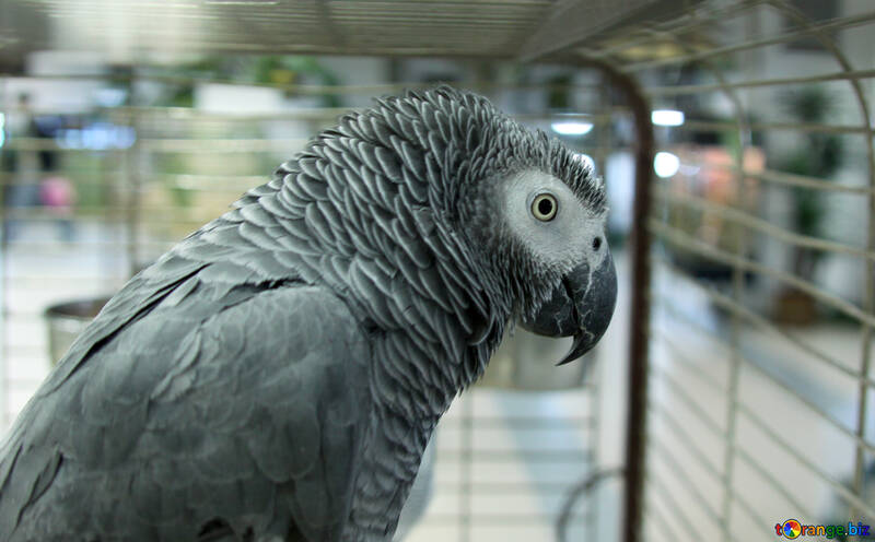Попугай в магазине №10824