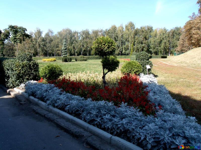 Color  Plants №10050