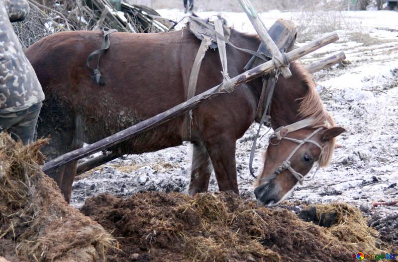 Working  horse №10475