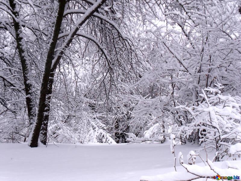 White  landscape  №10533